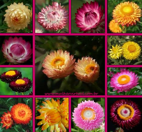Resultado de imagem para flores Sempreviva