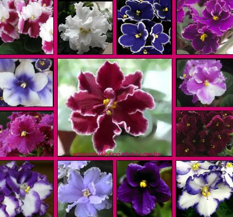 Resultado de imagem para flores Violetas